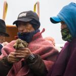 Массовое самоубийство птиц в Эквадоре — чем не повод для фольклорного фестиваля?